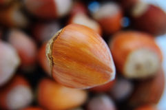 One big hazelnut Stock Images