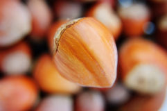One big hazelnut in focus Royalty Free Stock Photo