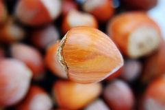 One big hazelnut in focus Royalty Free Stock Image