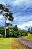 One big high tree and walkway at Kao Yai National Park, THailand Royalty Free Stock Photography