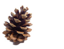 One big natural dry pine cone isolated on white background Stock Image