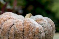 One big pumpkin Stock Photos