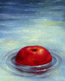 One big ripe red apple floating on the water surface. Stock Images
