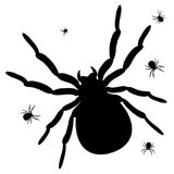 One big spider and a few little black spiders. On the white background Royalty Free Stock Images