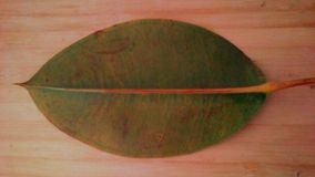 Leaf. One big tropical fall leaf agains wooden backround in horizontal view royalty free stock photography