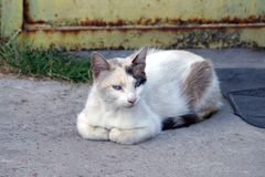 One big white cat lies and looks on the gray asphalt stock images