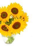 One bight sunflower Royalty Free Stock Image