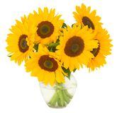 One bight sunflower Royalty Free Stock Image