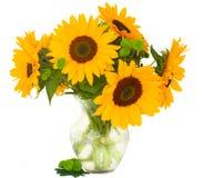 One bight sunflower Royalty Free Stock Photo