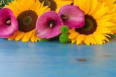 One bight sunflower Stock Photography