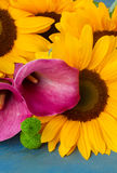One bight sunflower Royalty Free Stock Images