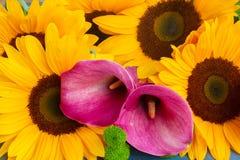 One bight sunflower Stock Image