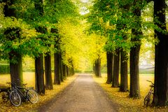 Free One Bike Is Leaning Against Trees And Tree Tunnels In Germany During The Fall Royalty Free Stock Photo - 168411475