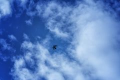Alone on the blue sky. One bird alone on the blue sky Stock Images
