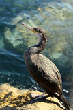 One bird standing on stone Royalty Free Stock Photo