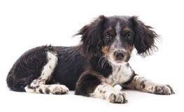 One black dog. On a white background stock photos