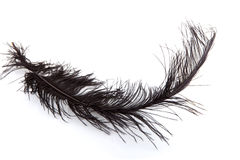 One black feather Stock Photos