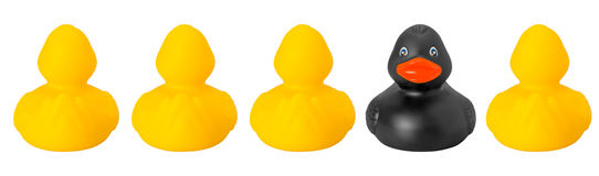 One black and four yellow toy rubber ducks Stock Photo