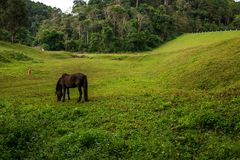 One Black Horse in a grass field of the hill Stock Photography