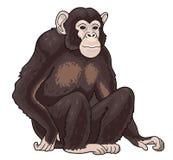 One black monkey chimpanzee. Sitting, painted on white. One wild african animal. ape-man Royalty Free Stock Image