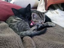 Two kittens sleeping on blanket royalty free stock image