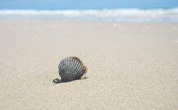 One black seashell on sand Royalty Free Stock Photo
