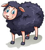 One black sheep Stock Image
