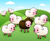 One black sheep Stock Images