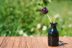 One black tulip in a vase outdoor. Royalty Free Stock Photos