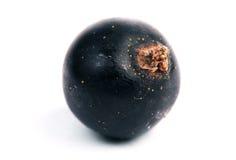 One blackberry. Macro. Isolated white Royalty Free Stock Photos