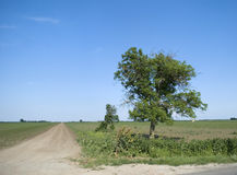 One blooming tree on the edge of the old country road. Tree gazing Stock Images