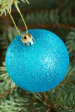 One blue christmas ball handing on a tree. Stock Photos