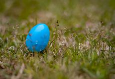 One blue Easter egg in the green grass stock photography
