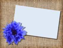 One blue flower with message-card Stock Image