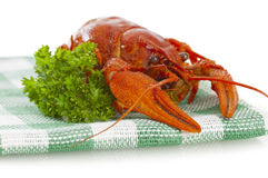 One boiled crawfish with parsley on the checkered serviette Royalty Free Stock Photography