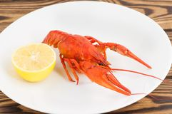 One boiled red crayfish near half of lemon in white ceramic dish. On old rustic brown wooden planks royalty free stock photos