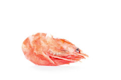 One boiled shrimp Royalty Free Stock Image