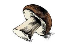 One boletus mushroom Stock Images