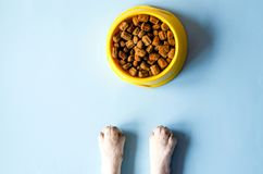 One bowl of yellow color with food and paws with a dog face. stock image