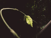 One brighten green leaf. One green leaf brighten with sunlight in dark corner royalty free stock photos