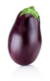 One brinjal isolated on white background Stock Photography