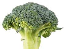 One broccoli upright on white background Royalty Free Stock Image