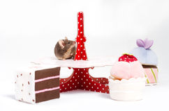 One broun curious domestic mouse is sitting on a plate with plush cakes Stock Image