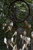 One brown dream catcher with green trees. As background in sunlight Stock Images