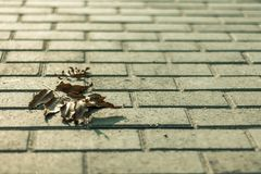 One dry leaf on the asphalt Royalty Free Stock Image