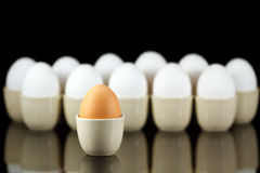 One brown egg in front of white eggs 2 Stock Image