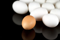 One brown egg and some white eggs Stock Photography