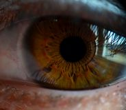 One Brown Eye Royalty Free Stock Image