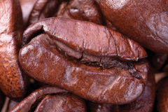 One brown grains of coffee Royalty Free Stock Images