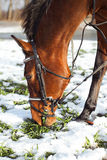 One brown horse Stock Photo